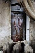 Tommaso_ausili_slaughterhouse02